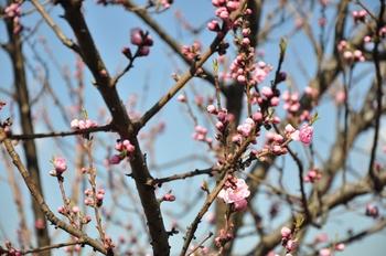 春間近.jpg