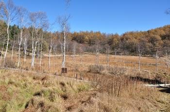 湿原の紅葉.jpg