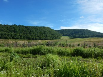 ⑤中野の森と高畠山.JPG