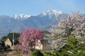 甲斐駒と桜.jpg